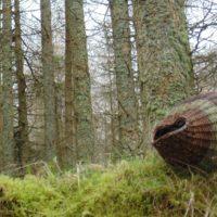 Basket in the Woods by Hanna Van Aelst